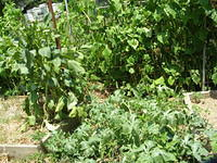 2015 Vegetable Garden Season