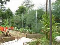 The Garden Growing In June