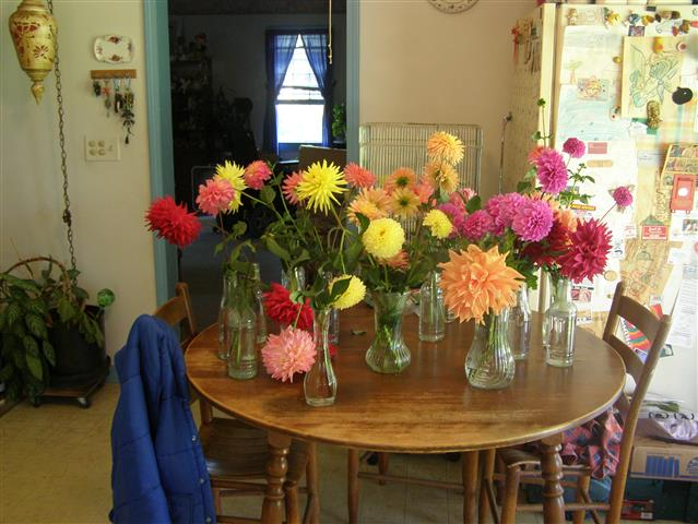 Table Full Of Cut Dahlias